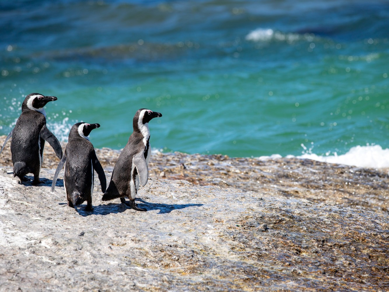 Wildlife Response African Penguins