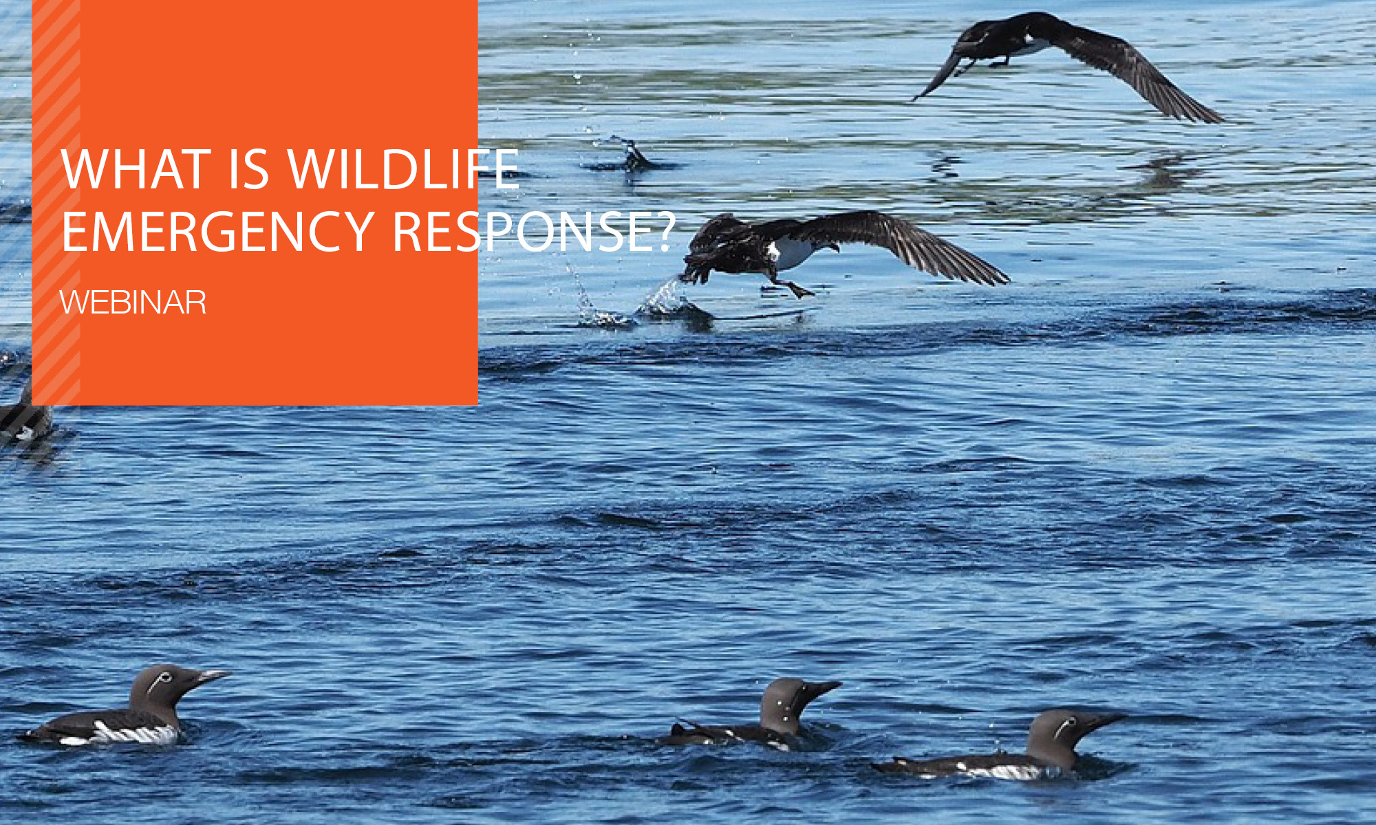 Recorded Webinar: What is Wildlife Emergency Response?