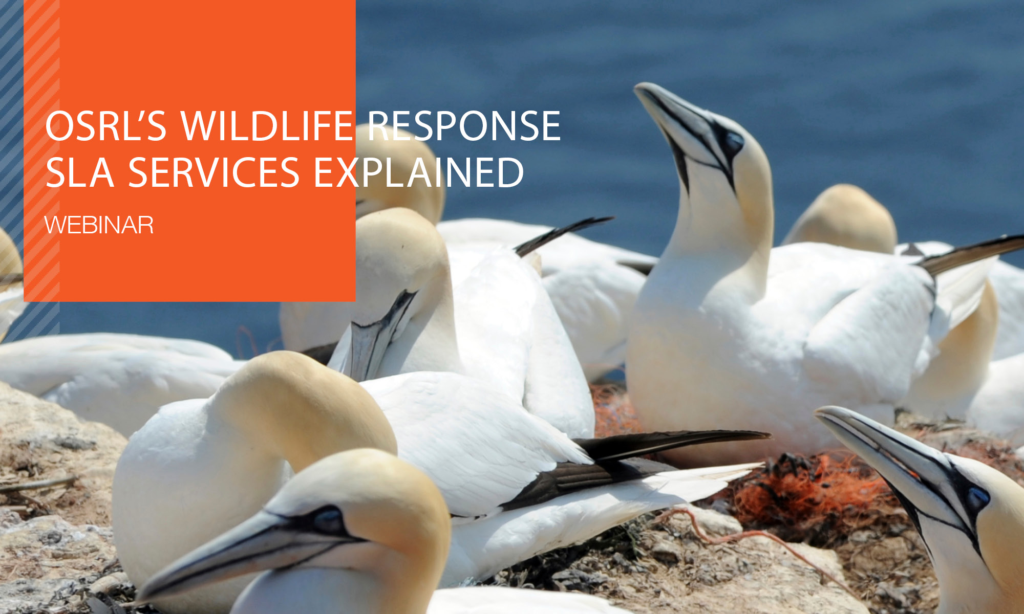 Recorded Webinar: OSRL's Wildlife Response SLA Services Explained